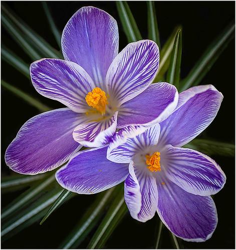 Signs of Spring by Barbara Dunn - HM Class M DPI-Nov 2020