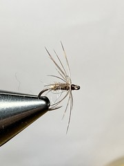 Photo of Hen & Spindrift soft hackle