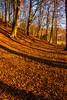 Tree Shadows, Raith Estate, Kirkcaldy