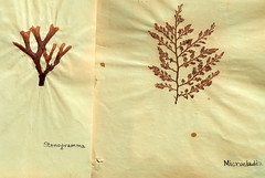 Anglų lietuvių žodynas. Žodis rhodophyta reiškia <li>Rhodophyta</li> lietuviškai.