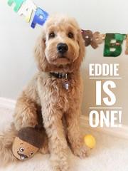 Eddie is a Annie & Nolan sweet baby