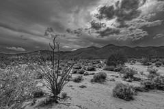 Pinyon Wash, Anza Borrego desert, California