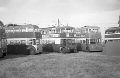 Photo of humb - various trolleybuses stc JL