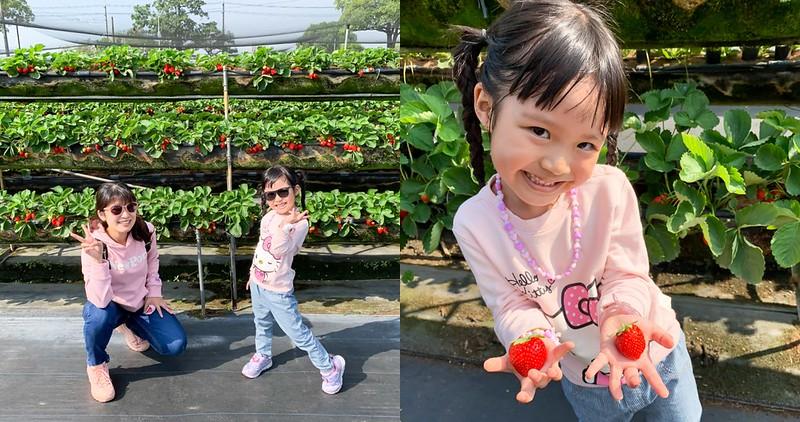 【台南景點】善化 美裕草莓園 草莓紅了~ 可以帶小孩來採囉!高架草莓園站著採真輕鬆!