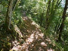 Trail @ Bois des Hêtres @ Talloires-Montmin