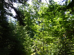 Forest @ Off-trail @ Talloires-Montmin