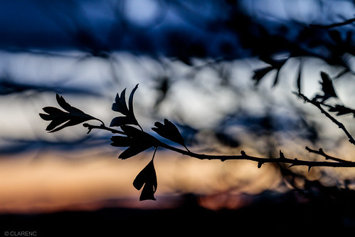 last leaf of the day