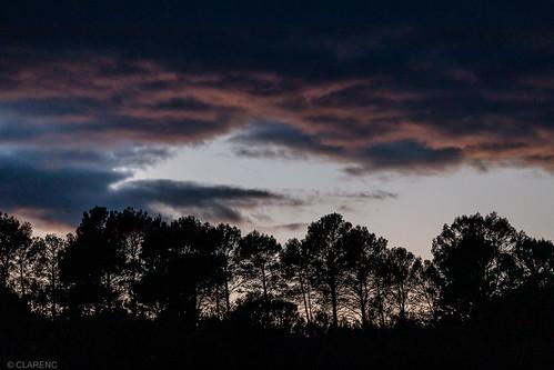 pink clouds over dark forest