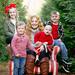 Christmas Tree Mini Session