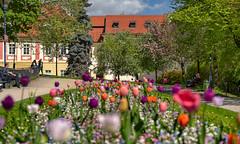 Prague: Petřín Gardens