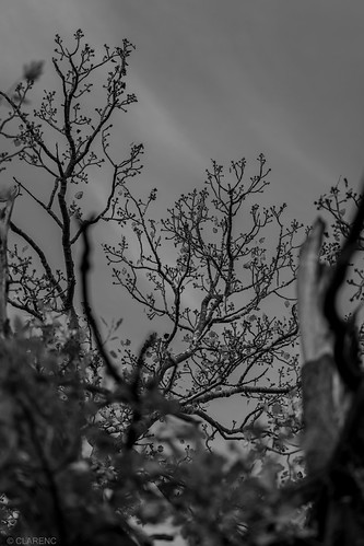 Camargue autumn #6