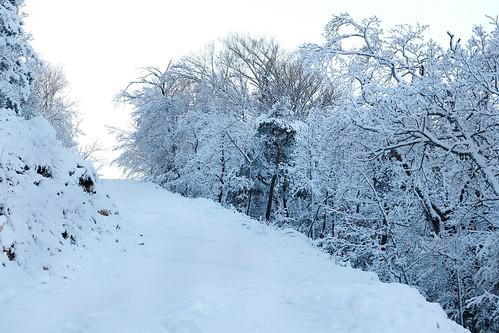 """J'ai goûté la première neige...un très bon cru • <a style=""""font-size:0.8em;"""" href=""""http://www.flickr.com/photos/125430208@N07/50692088466/"""" target=""""_blank"""">View on Flickr</a>"""
