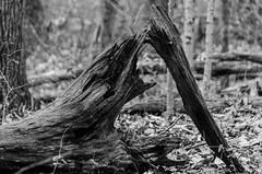 Winton_Woods-2473.jpg