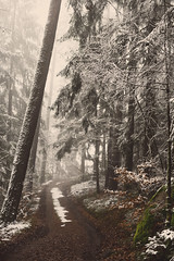 Into the snowy forest