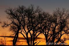 December 8, 2020 - Sunrise silhouettes. (Bill Hutchinson)