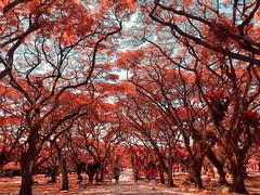 Pasir Ris Park, Singapore
