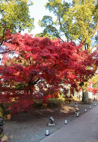 Autumn forever