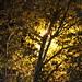 Árbol bajo luz de farola