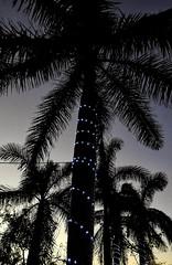 My Kind of Christmas Trees!