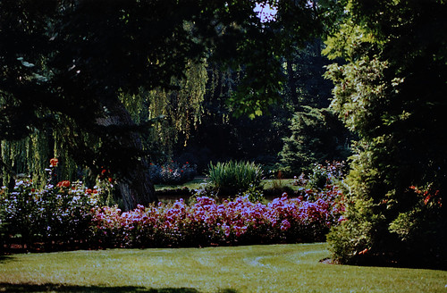 """Rosarium Uetersen 1996 (06) • <a style=""""font-size:0.8em;"""" href=""""http://www.flickr.com/photos/69570948@N04/50722268666/"""" target=""""_blank"""">View on Flickr</a>"""