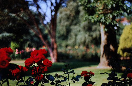 """Rosarium Uetersen 1996 (05) • <a style=""""font-size:0.8em;"""" href=""""http://www.flickr.com/photos/69570948@N04/50722440567/"""" target=""""_blank"""">View on Flickr</a>"""