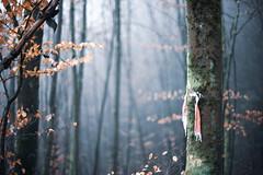 Tree scarf?