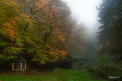 "forêt de bercé-DSC3717 • <a style=""font-size:0.8em;"" href=""http://www.flickr.com/photos/161151931@N05/50725250068/"" target=""_blank"">View on Flickr</a>"