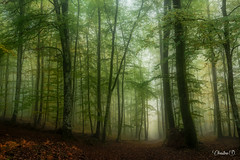 "forêt de bercé-DSC3705 • <a style=""font-size:0.8em;"" href=""http://www.flickr.com/photos/161151931@N05/50725983746/"" target=""_blank"">View on Flickr</a>"