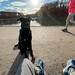 Relax at the lake in the city, sitting in the winter sun with the dog while people go jogging