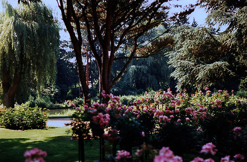 """Rosarium Uetersen 1996 (07) • <a style=""""font-size:0.8em;"""" href=""""http://www.flickr.com/photos/69570948@N04/50731797718/"""" target=""""_blank"""">View on Flickr</a>"""