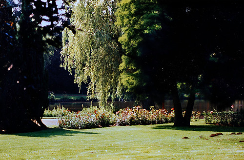 """Rosarium Uetersen 1996 (08) • <a style=""""font-size:0.8em;"""" href=""""http://www.flickr.com/photos/69570948@N04/50731816328/"""" target=""""_blank"""">View on Flickr</a>"""