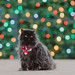 Christmas Cat Photography