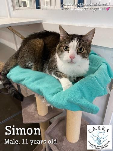 SIMON & (Maxwell)  Male 11 yr