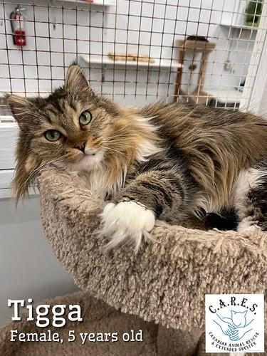 TIGGA    Female 5 yr
