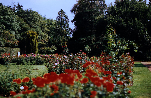 """Rosarium Uetersen 1996 (16) • <a style=""""font-size:0.8em;"""" href=""""http://www.flickr.com/photos/69570948@N04/50746766801/"""" target=""""_blank"""">View on Flickr</a>"""