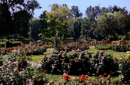 """Rosarium Uetersen 1996 (15) • <a style=""""font-size:0.8em;"""" href=""""http://www.flickr.com/photos/69570948@N04/50746853607/"""" target=""""_blank"""">View on Flickr</a>"""