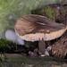 The whole mushroom