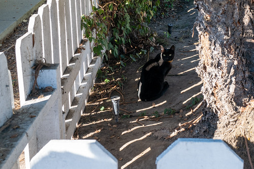 The Cats of University Heights: Measure