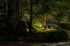 """""""Der letzte Sonnenstrahl"""" im Schwarzenbächle-Tal"""
