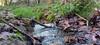 Havering Park Stream