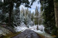Straße in den Schwarzwald