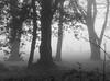 Foggy Golfers, Nettlebed