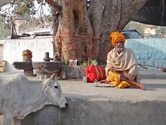 Sadhu (Orchha, Inde)