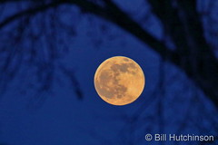 December 30, 2020 - The last full moon of the year. (Bill Hutchinson)