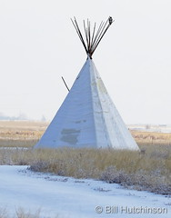 December 29, 2020 - Hawk stakes out a teepee. (Bill Hutchinson)