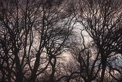 Photo of Winter Trees