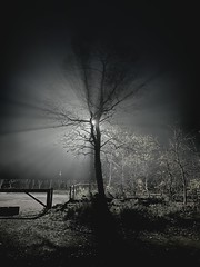 Photo of Misty Tree