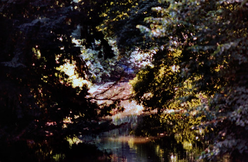 "Arboretum Ellerhoop 1996 (01) • <a style=""font-size:0.8em;"" href=""http://www.flickr.com/photos/69570948@N04/50782038868/"" target=""_blank"">View on Flickr</a>"