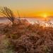 Langdon Sunrise