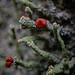 Small world: Lichen it